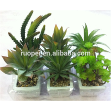 Wholesale Indoor Flowers Succulent Of Garden Ornament