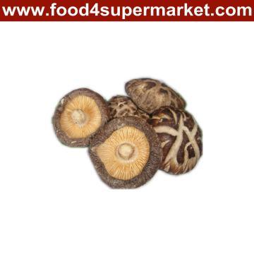Getrockneter Pilz 1kg