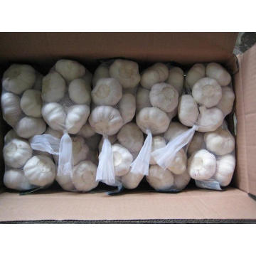 Export New Crop Fresh Normal White Garlic (4.5/5.0)