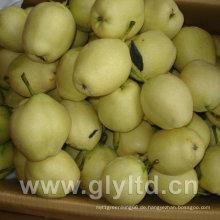 Süß und knackig frisch Frühe Su Birne