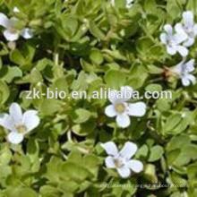 Meilleur prix boswellia serrata extrait poudre