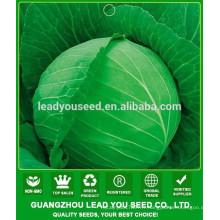 NC40 Shuru Best graines de chou pour champ ouvert, sélectionneur de graines