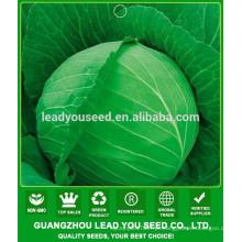 NC40 Shuru Melhor sementes de repolho para campo aberto, criador de sementes