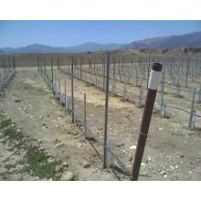 Vineyard Metal Trellis Post