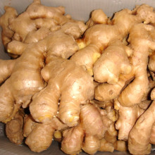 Exporter la nouvelle culture chinoise Good Quality Ginger