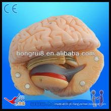 Modelo de anatomia do cérebro de PVC de tamanho avançado modelo cérebro humano de alta qualidade