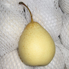 Delicious, Sweet, Juicy Fresh Ya Pear