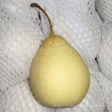 Sweet and Juicy Fresh Ya Pear