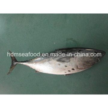Замороженная рыба-бонито (Euthynnus affinis)