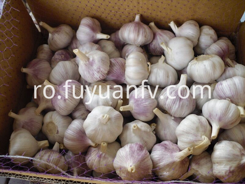 To Brazil Garlic