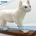 Modelo médico 12004 da acupunctura do gato da anatomia plástica da educação médica de A04 (12004)