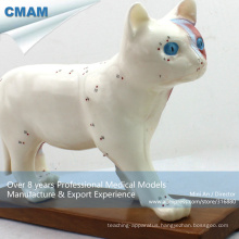 A04(12004) Medical Education Plastic Anatomy Cat Acupuncture Animal Model 12004