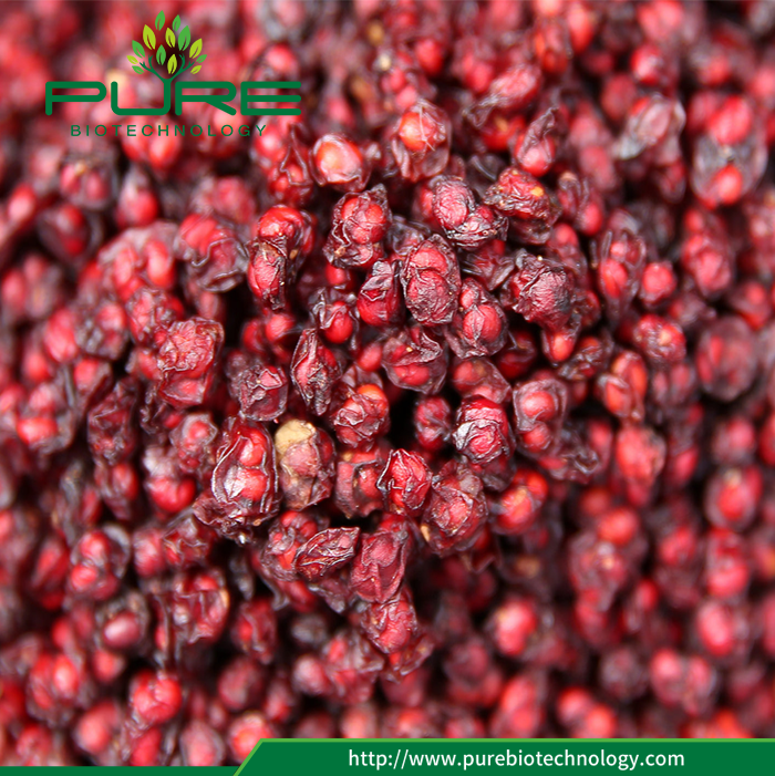 Dried North Schisandra Chinennsis 2017 New Crop (3)