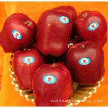 provide new crop red huaniu apple
