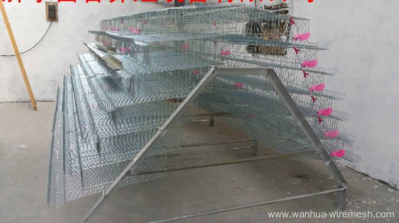 A type low-priced quality layer chicken cage