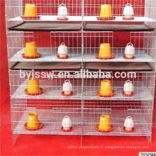 poulets de volaille de prix / cage de poulet à vendre