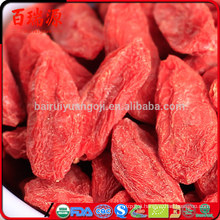 goji berries videos goji berries variety ningxia goji berry