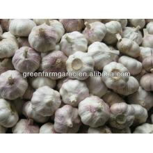 wholesale fresh garlic price 2016