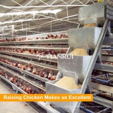 Système d'alimentation automatique de volaille de ferme de vente directe pour la cage de poulet