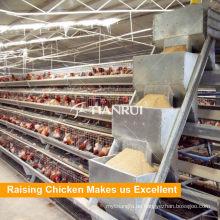 Qingdao Factory Huhn Farm Geflügelkette Fütterung System für Schicht