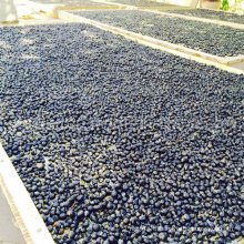 Medlar GMP Manufacture Sample Free Dried Black Wolfberry