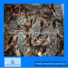 Crabe de boue parfaite et superbe parfaite avec qualité de fien
