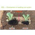organic liquid seaweed fertilizer for agriculture