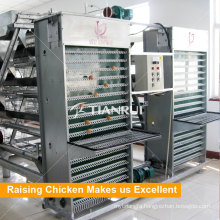 Tianrui Design Automatic Egg Collecting Machine for Rearing Equipment