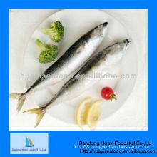 frozen mackerel pacific horse mackerel
