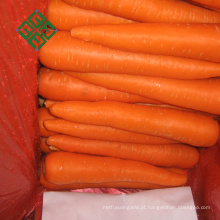 2017 chinesa cenoura fresca