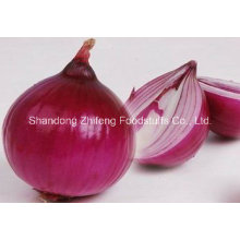 Chinese Fresh Red Onion in Good Quality