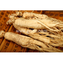 Nature quality medicinal materials white ginseng