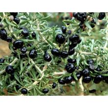 Natural Organic Black Goji Berries