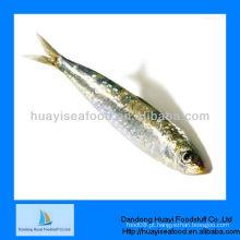 Peixe de marisco fresco congelado sardinha