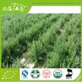 Fabrik-Versorgungsgroßverkauf bester Preis organischer schwarzer goji