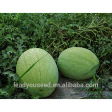 NW04 Fanfa Sale best watermelon seeds for planting