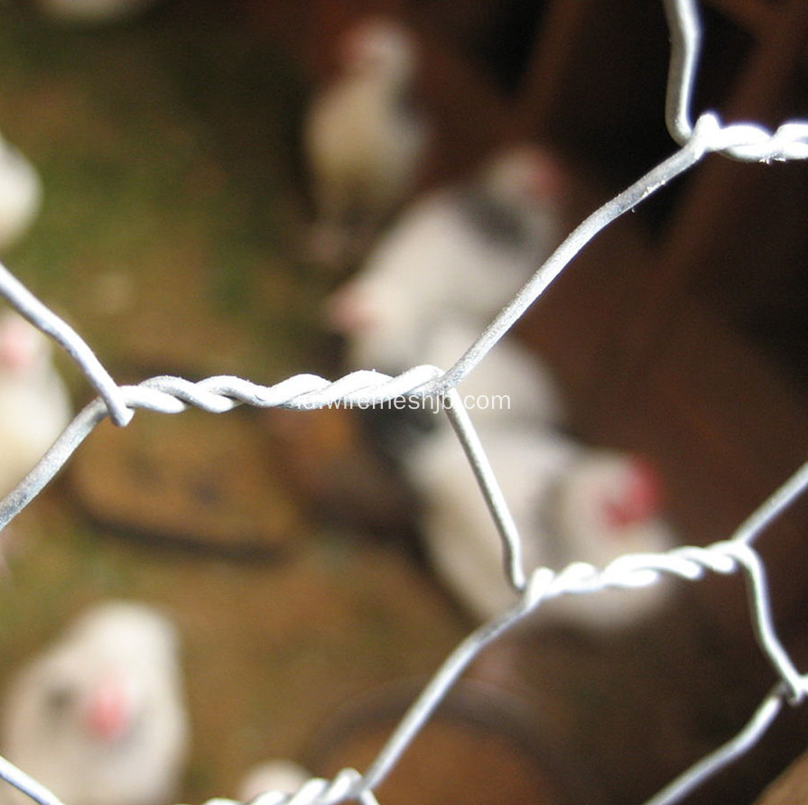 Hexagonal Chicken Livestock Wire Mesh