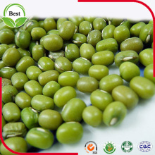 Chinese 2016 Polished Small Green Beans 3-4mm