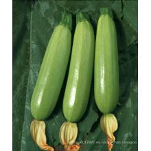 HSQ15 Shuoyou redondo verde F1 calabaza híbrida / semillas de calabacín