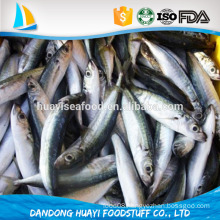 frozen new fresh anchovy