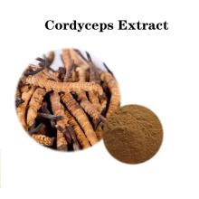 Buy online active ingredients price Cordyceps Extract