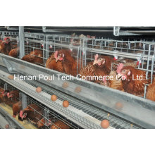 4-5 Tiers H Frame Layer Chicken Cage (Euro Standard)