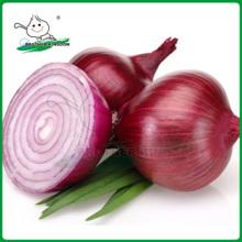 Cebolla fresca / Cebolla en China / Cebolla precio bajo