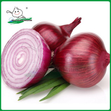 Fresh onion/ Onion in China /Onion low price