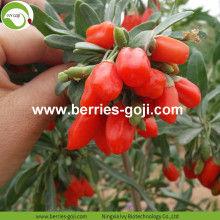 Factory Supply Dried All Kinds Of Goji Berry
