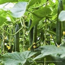 Aminoácido Fertilizante Líquido