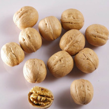 Welcome to choose and buy organic walnuts