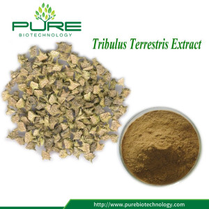 Hot Sale Tribulus Fruit Extract Pulver High Quality