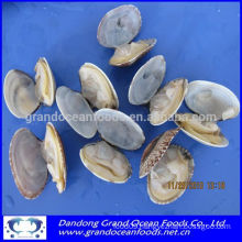 Frozen cooked white clams