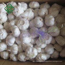 wholesale fresh pure white garlic